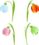 Spring Snowdrop Flowers  Illustrations. Isolated spring snowdrop flowers , green flower, blue flower, red flower, purple flower, plants, flora, nature, flower Stock Photo