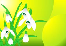 Spring snowdrop vector Stock Photography