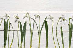 Spring snowdrops blossom with card on a wooden background Royalty Free Stock Image