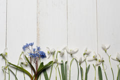 Spring snowdrops blossom with card on a wooden background Stock Photo