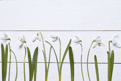Spring snowdrops blossom with card on a wooden background Royalty Free Stock Photos