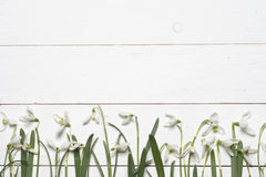 Spring snowdrops blossom with card on a wooden background. Royalty Free Stock Images