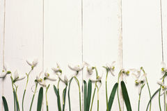 Spring snowdrops blossom with card on a wooden background. Stock Image
