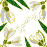 Spring and snowdrops. Bouquet of snowdrops with open and closed buds of spring and the inscription in retro styles Royalty Free Stock Photos