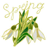 Spring and snowdrops. Bouquet of snowdrops with open and closed buds of spring and the inscription in retro styles Royalty Free Stock Photo