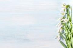 Spring snowdrops Stock Image