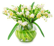 Spring snowflake flowers in glass bowl Royalty Free Stock Image
