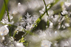 Spring Snowflake. Snowflakes melting in the spring sun Royalty Free Stock Images