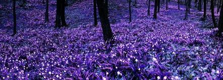 Free Spring Snowflakes Stock Image - 13185541