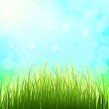 Spring solar background and tender grass. The awakening of natur Stock Photography