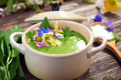 Spring soup Royalty Free Stock Images