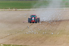 Spring sowing with tractor. Spring bowing with tractor and seeding machine,birds flying around and taking out the seeds Royalty Free Stock Photos