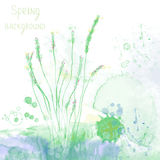 Spring spa background with herbs and grass. Abstract illustration Stock Photo