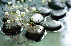 Spring spa concept. Spring branch under stones in water, spa spring concept, stylized photo Stock Photography