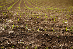 The Spring sprout. S in а franch field Royalty Free Stock Image