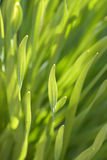 Spring sprout royalty free stock photography
