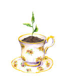 Spring sprout, green growing plant in tea cup. Watercolor Stock Image