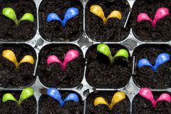 Spring sprouts germinate. D from seed Stock Photography
