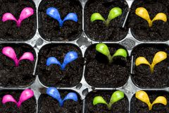 Spring sprouts germinate. D from seed Royalty Free Stock Photography