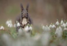 Spring squirrel royalty free stock photos