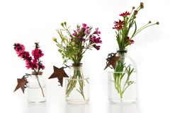 Spring Stars. Delicate spring blooms, tea tree, wax flower and Santana Red Stock Image