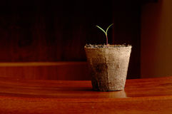 Spring Start. Fresh growing start in a peat pot situated on the right side of the frame Stock Photo