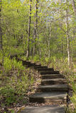 Spring Step Trail In Woods. Wooden stairs climb a hill in the woods Royalty Free Stock Images