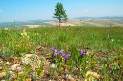 Steppe in spring royalty free stock image