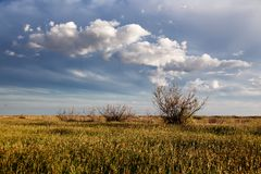 Spring in the steppes Royalty Free Stock Images