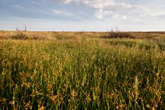 Spring in the steppes Royalty Free Stock Photo