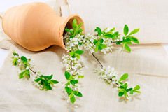 Spring Still Life Royalty Free Stock Photo