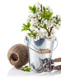 Spring still life branch blooming plum in bucket with garden tools Royalty Free Stock Photos