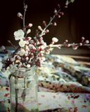 Spring Still Life. Branches of a flowering apricot in a glass vase on a table and a multicolored background Royalty Free Stock Photos