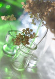 Spring still life with branches. Light easy still life with glass small bottles and branches Royalty Free Stock Photography