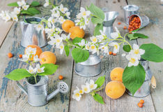 Spring still life Stock Photography
