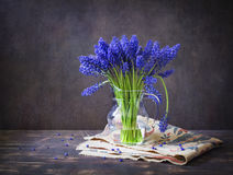 Spring still life with muscari. In a clear glass jar on rough cloth and dark boards, rear dark background royalty free stock images