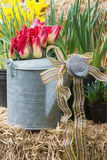 Spring Still Life. An old watering can holds a garden decor still life of vibrant spring flowers Royalty Free Stock Images