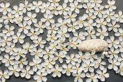 Spring still life white stone on white flowers Royalty Free Stock Photo