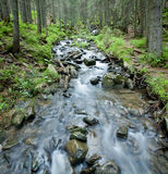Spring stream in the Carpathians. Stock Photo