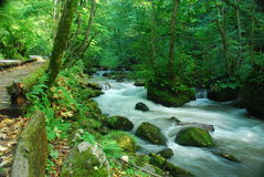 Spring Stream in Deep Forest Stock Photo