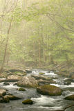Spring Stream in Fog. Smoky Mountain Stream with Dogwood blooms in fog stock photography