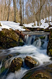 Spring stream in forest Royalty Free Stock Photos