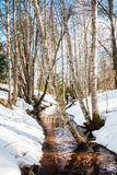 Spring stream in forest Stock Photos