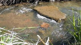 Spring stream and ripples on the water. stock video footage