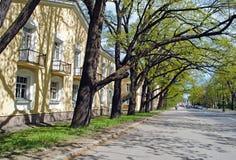 Spring street shadows Stock Image