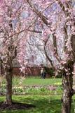 Spring Stroll Stock Image