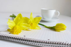 Spring styled stock photo. Still life with daffodil flowers, Narcissus, note book and cup of coffee. Blurred background Royalty Free Stock Photos