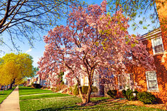 Spring in suburbs Stock Photos