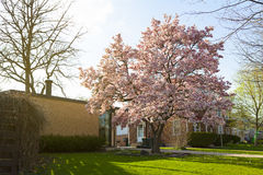 Spring in suburbs Royalty Free Stock Photo