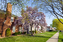 Spring in suburbs Stock Image